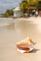 Close up of conch shell on tropical beach