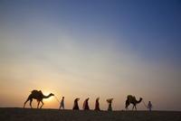 Camel walking behind Indian man and women 11018054506  写真素材・ストックフォト・画像・イラスト素材 アマナイメージズ