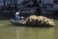 Farmer rowing boat with harvested rice on river