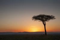 Tree at sunset in savanna landscape