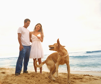 Couple playing with dog on beach