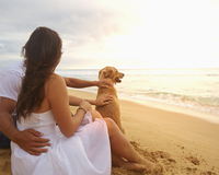 Couple sitting with dog on beach