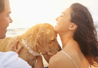 Couple petting dog on beach