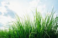 Close up of grass under blue sky