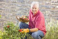 Caucasian man picking vegetables in garden