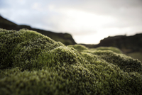 Close up of mossy rock in remote landscape
