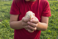 Boy holding chick outdoors