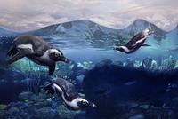 Penguins swimming underwater 11018066871| 写真素材・ストックフォト・画像・イラスト素材|アマナイメージズ