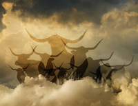 Silhouette of bulls in cloudy sky