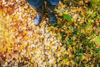 High angle view of woman standing in autumn leaves
