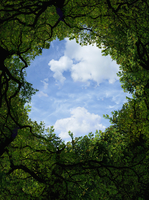 Low angle view of sky and tree canopy