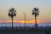 Palm trees on beach at sunset, Santa Monica, California, United States
