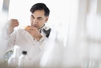 Mixed race scientist working in laboratory 11018069243| 写真素材・ストックフォト・画像・イラスト素材|アマナイメージズ