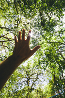Hispanic man reaching for forest canopy