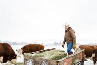 Caucasian farmer hauling hay in snowy field 11018070808| 写真素材・ストックフォト・画像・イラスト素材|アマナイメージズ