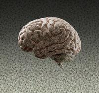 Brain made of dollar bills