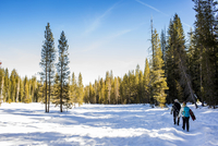 Hikers walking in snowy forest