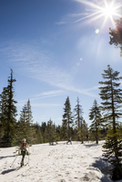 Cross-country skier in snowy forest