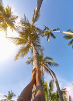Low angle view of Caucasian man laying feet on palm tree