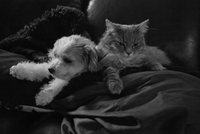 Pets snuggling on sofa