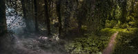 Panoramic view of fog and sunlight in remote forest