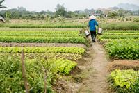 Farmer carrying water in rural crop field