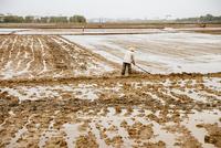 Farmer working in rural rice fields
