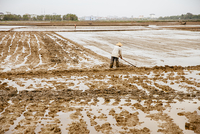 Farmer working in rural rice fields 11018072825| 写真素材・ストックフォト・画像・イラスト素材|アマナイメージズ