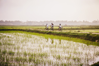 Tourists riding bicycles in rural landscape 11018072831| 写真素材・ストックフォト・画像・イラスト素材|アマナイメージズ