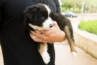 Caucasian man holding puppy