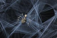 Spider crawling in web of light streams 11018073131| 写真素材・ストックフォト・画像・イラスト素材|アマナイメージズ