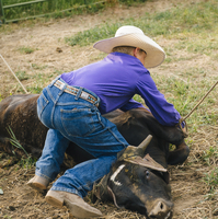 Cowboy tying cattle on ranch