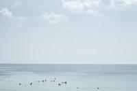 Flock of birds swimming in ocean