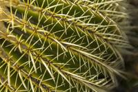 Close up of cactus needles 11018080152  写真素材・ストックフォト・画像・イラスト素材 アマナイメージズ