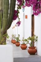 Potted plants along walkway 11018080477  写真素材・ストックフォト・画像・イラスト素材 アマナイメージズ