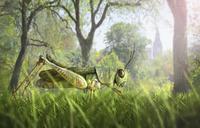 Illustration of cricket in grass 11018082715| 写真素材・ストックフォト・画像・イラスト素材|アマナイメージズ