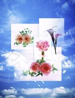 フラワーイメージ 11019003071| 写真素材・ストックフォト・画像・イラスト素材|アマナイメージズ