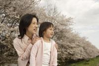 桜と母子 11019004139| 写真素材・ストックフォト・画像・イラスト素材|アマナイメージズ