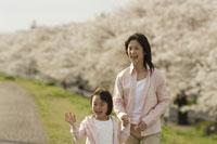桜と母子 11019004141| 写真素材・ストックフォト・画像・イラスト素材|アマナイメージズ