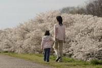 桜と母子 11019004147| 写真素材・ストックフォト・画像・イラスト素材|アマナイメージズ