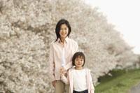 桜と母子 11019004184| 写真素材・ストックフォト・画像・イラスト素材|アマナイメージズ