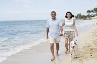 ビーチを犬と散歩するシニア夫婦