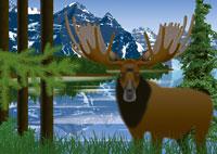 夏の森とヘラジカのカナダイメージ