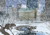 冬のセントラルパークとリスイメージ 11019006206| 写真素材・ストックフォト・画像・イラスト素材|アマナイメージズ