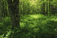 初夏の森林