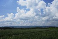 ジャガイモ畑と山並