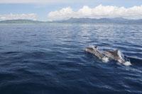 イルカの遊泳