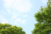 新緑と空 11019014497| 写真素材・ストックフォト・画像・イラスト素材|アマナイメージズ