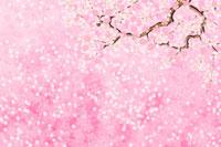 桜 11019014800| 写真素材・ストックフォト・画像・イラスト素材|アマナイメージズ