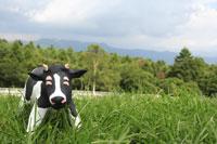 草原と牛 クラフト 11019015885| 写真素材・ストックフォト・画像・イラスト素材|アマナイメージズ
